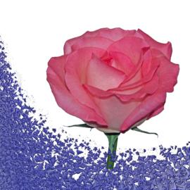 Почему после нового года бум разводов и как укрепить семью